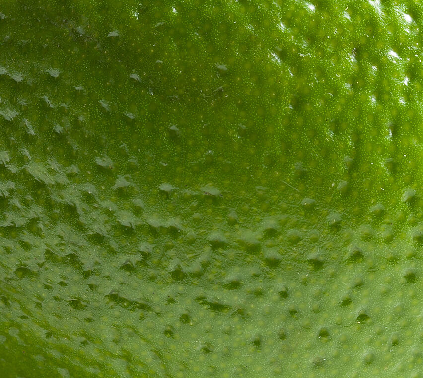 Lime Peel