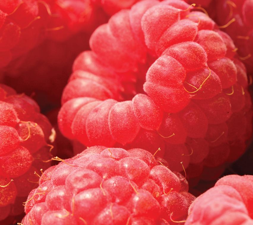 Raspberry Plant Stem Cell